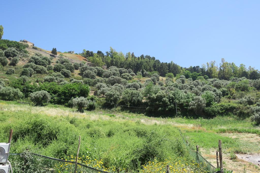Alcuni terreni della tenuta