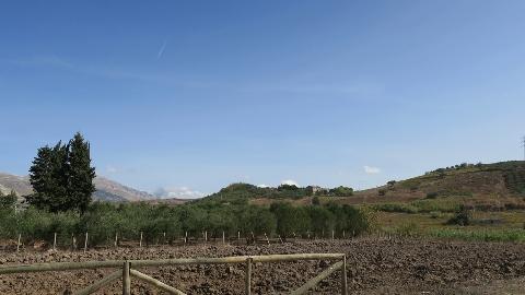Azienda agricola Sgrò