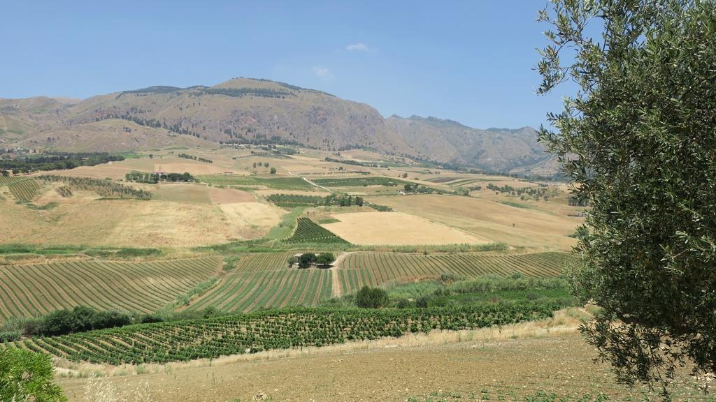 I Gelsi Azienda agricola biologica